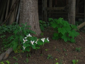 tranquil shady areas Vancouver Island property for sale
